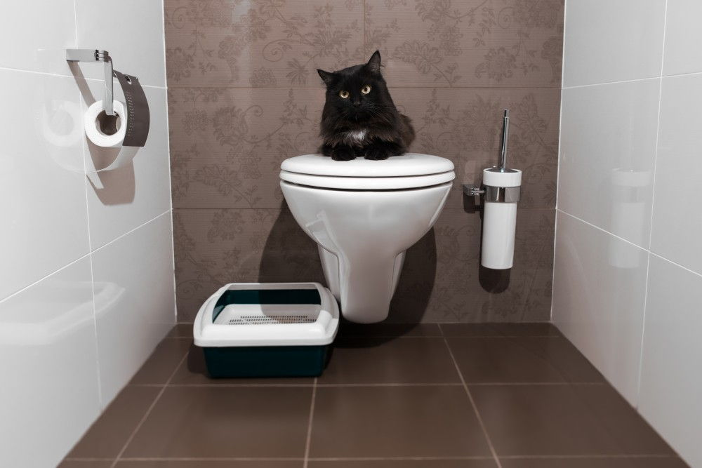 3 Steps to Train a Kitten to Use a Litter Box in 7 Days Using Litter, Spray and Encouragement